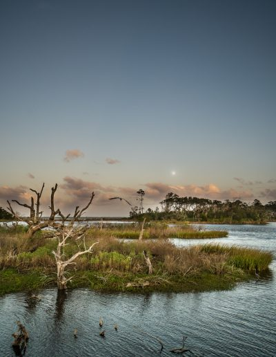 Moon and bird pond on Big Talbot Island